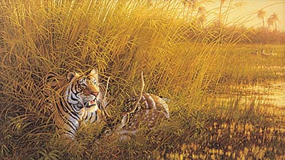 "Michael Sieve Limited Edition Print: ""Heart of India-Tiger """