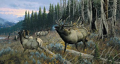 "Michael Sieve Limited Edition Print: ""Master Of Intimidation: Elk"""
