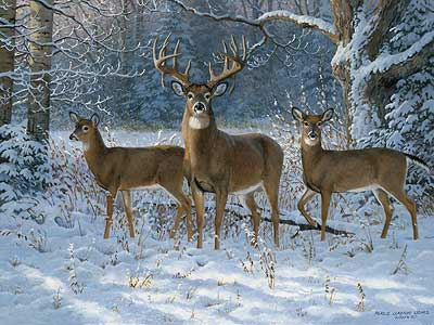 "Persis Clayton Weirs Handsigned & Numbered Limited Edition Print:""Winter Trio-Whitetails """