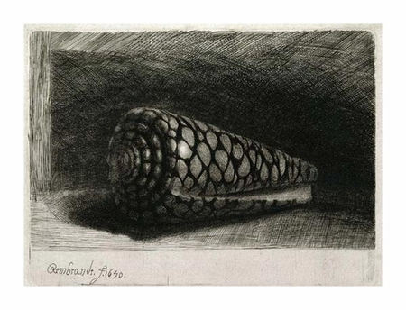 "Rembrandt Van Rijn Fine Art Open Edition Giclée:""The Shell (Conus Marmoreus)"""