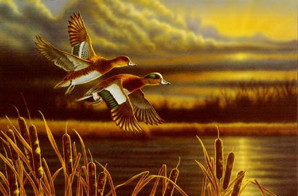 "Richard Clifton Limited Edition Print:""Widgeon-Outfront"""