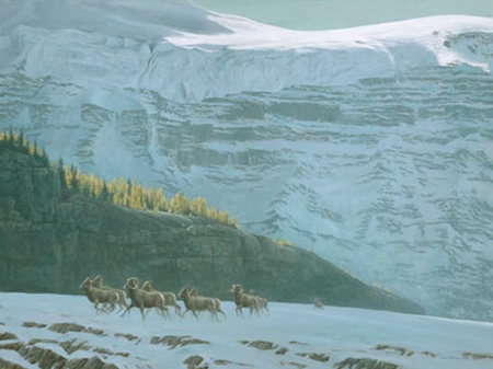 "Robert Bateman Hand Signed And Numbered Limited Edition Print and Canvas Giclee :""Big Horn Sheep Herd"""