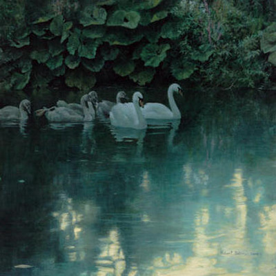 "Robert Bateman Hand Signed And Numbered Limited Edition Print and Canvas Giclee :""Great Dunford Mute Swans"""