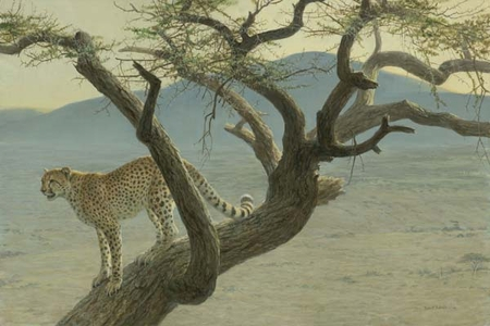 "Robert Bateman Hand Signed And Numbered Limited Edition Print  and Canvas Giclee :""Lewa Cheetah"""