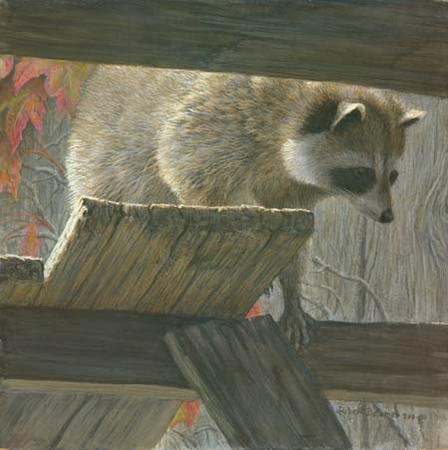 "Robert Bateman Hand Signed and Numbered Limited Edition Print: ""The Prowler - Racoon"""