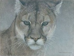 "Robert Bateman Handsigned and Numbered Limited Edition:""Intent – Cougar"""