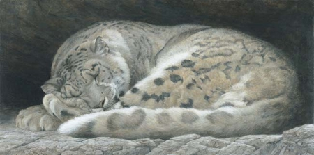 "Robert Bateman Handsigned and Numbered Limited Edition :""Sleeping - Snow Leopard """