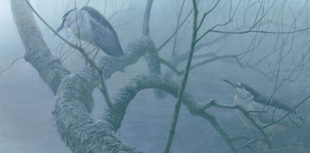 "Robert Bateman Handsigned and Numbered Limted Edition Print:""Black Crowned Night Heron Pair """