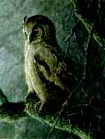 "Robert Bateman Limited Edition Paper Print:""Giant Eagle Owl - Sappi"""