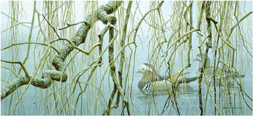 "Robert Bateman Limited Edition Paper Print:""Old Willow - Mandarin Pair"""