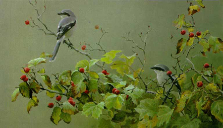 "Robert Bateman Limited Edition Paper Print:""Shrike Pair And Hawthorne"""