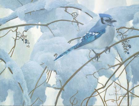 "Robert Bateman Limited Edition Paper Print:""Snowy Morning - Blue Jay"""