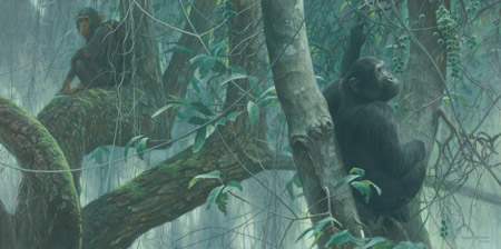 "Robert Bateman Limited Edition Print:""At Mahale - Chimpanzees"""