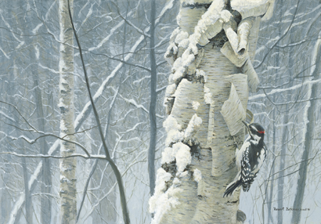 "Robert Bateman Limited Edition Print""Hairy Woodpecker on Birch"""