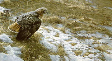 "Robert Bateman Limited Edition Print:""Spring Thaw-Red-Tailed Hawk"""