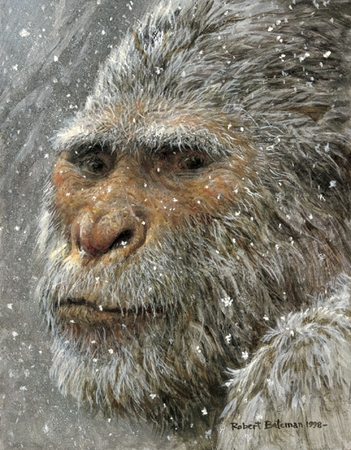 "Robert Bateman Limited Edition Print:""Yeti"""