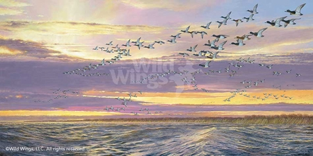 """Ron Van Gilder Hand Signed and Numbered Limited Edition:""""Grand Passage-Canvasbacks"""""""