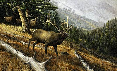 "Ron Van Gilder Limited Edition Print:""A Challenge to All-World Record Elk"""