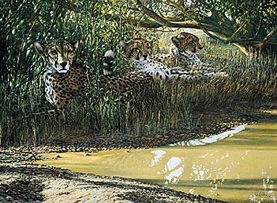 "Ron Van Gilder Limited Edition Print:""Beating The Heat-Cheetahs"""