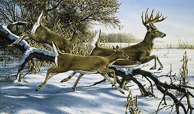 """Ron Van Gilder Limited Edition Print:""""Breaking Cover-Whitetail Deer"""""""