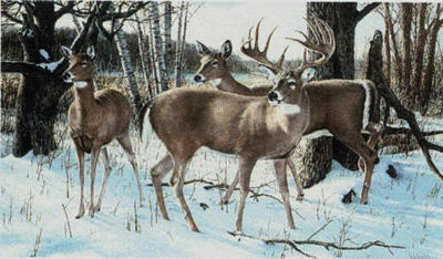 """Ron Van Gilder Limited Edition Print: """"Ever Watchful-Whitetail Deer"""""""
