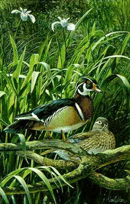 "Ron Van Gilder Limited Edition Print: ""Spring Elegance-Wood Ducks"""