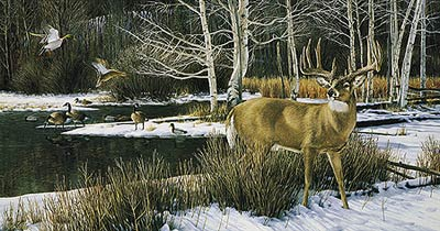 "Ron Van Gilder Limited Edition Print:""The Haven-Whitetail Deer"""