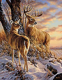 "Rosemary Millette Artist Proof Limited Edition Print:""Twilight Escapade-Whitail Deer"""