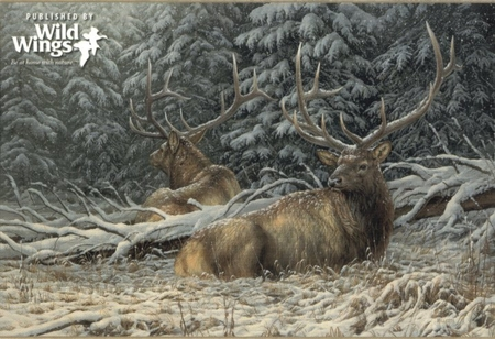 "Rosemary Millette Signed and Numbered Limited Edition Artist Proof Print: ""Sheltered Elk"""