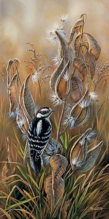 "Rosemary Millette Handsigned & Numbered Limited Edition Print:""Downy Woodpecker"""