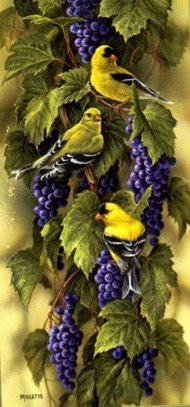 """Rosemary Millette  Limited Edition Print:""""Vineyard - GoldFinch"""""""