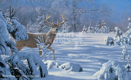 "Scot Storm Hand Signed and Numbered Limited Edition Artist Proof Print: ""Something's in the Air-Whitetail"""