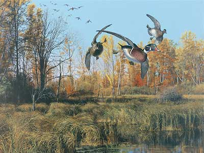 "Scot Storm Handsigned and Numbered Limited Edition:""Backwater- Wood Ducks"""