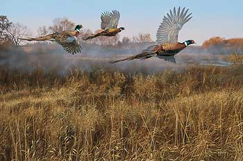 """Scot Storm Handsigned and Numbered Limited Edition: """"Morning Mist-Pheasants Artist Proof"""""""