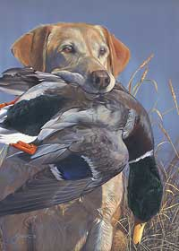 "Scot Storm Handsigned and Numbered Limited Edition Print: ""Prize Possession-Yellow Lab"""
