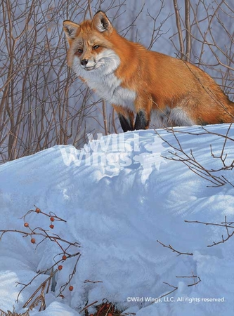 """Scot Storm Handsigned and Numbered Limited Edition Print: """"Winter's Red - Red Fox"""""""
