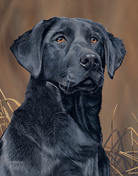 "Scot Storm Handsigned Open Edition:""Loyal Companion-Black Lab"""