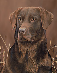 "Scot Storm Handsigned Open Edition:""Loyal Companion-Choc. Lab"""