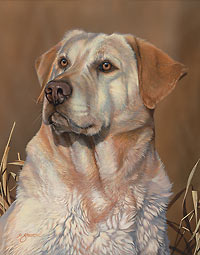 """Scot Storm Handsigned Open Edition:""""Loyal Companion-Y. Lab"""""""