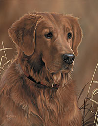 "Scot Storm Handsigned Open Edition Print:""Loyal Companion-Gldn Ret."""