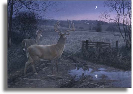 "Scot Storm Limited Edition Giclee on Paper:""Autumn Encounter"""