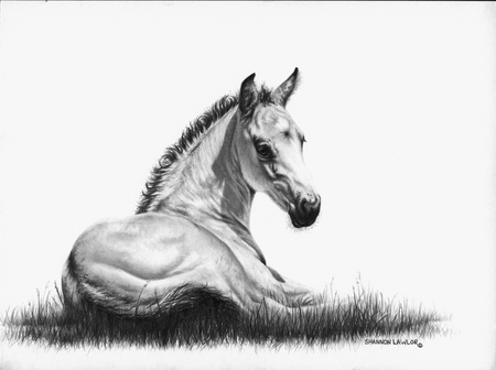"""Shannon Lawlor Handsigned and Numbered Limited Edition: """"Heaven Sent A Buckskin"""""""