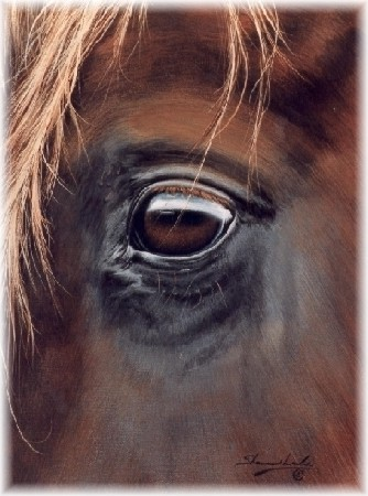 "Shannon Lawlor Handsigned and Numbered Limited Edition: ""Through Charlie's Eye"""