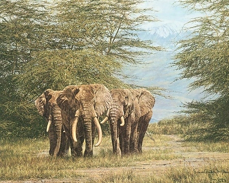 "Simon Combes Hand Numbered Limited Edition Print:""Amboseli Ancients """