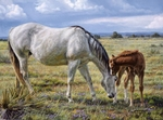 """Tim Cox Artist Hand-Signed and Numbered Limited Edition Print:""""Horse Whisperer"""""""