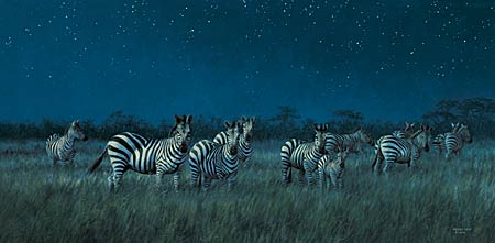 "Wild Wings Limited Edition Print: ""Midnight on the Serengeti - Zebras"""