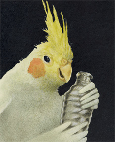 "Will Bullas Fine Art Signed Open Edition Canvas :""Cockatiel Shaker"""