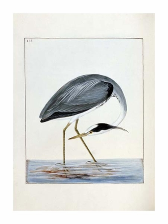 "William Lewin Fine Art Open Edition Giclée:""Heron"""