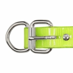 shop 1 in. Day Glow D-End Collar Buckle Detail