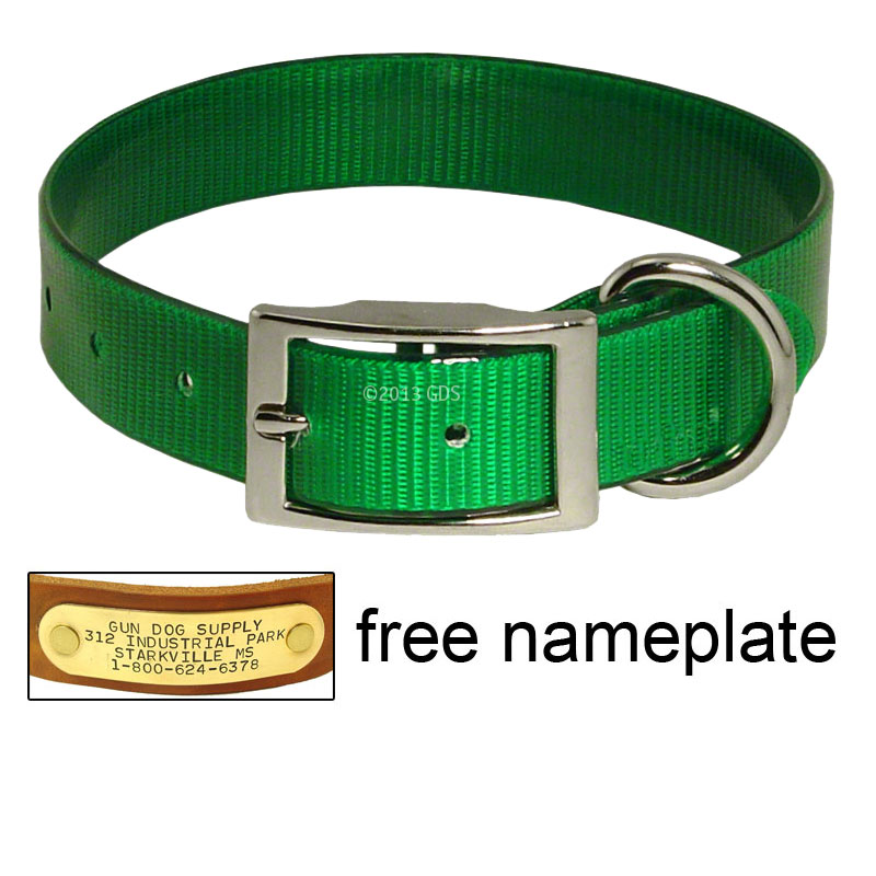 Day Glow Dog Collars With Name Plate